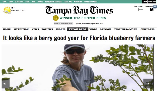 2017 Florida Blueberry Harvest Tampa Bay Times
