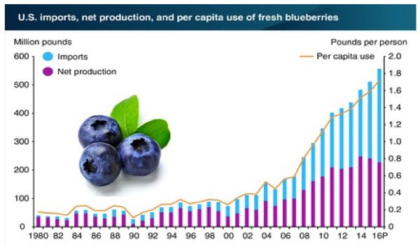 US Blueberry Demand Growth Chart