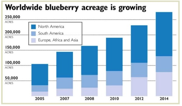 Worldwide Blueberry Acreage Growth Chart