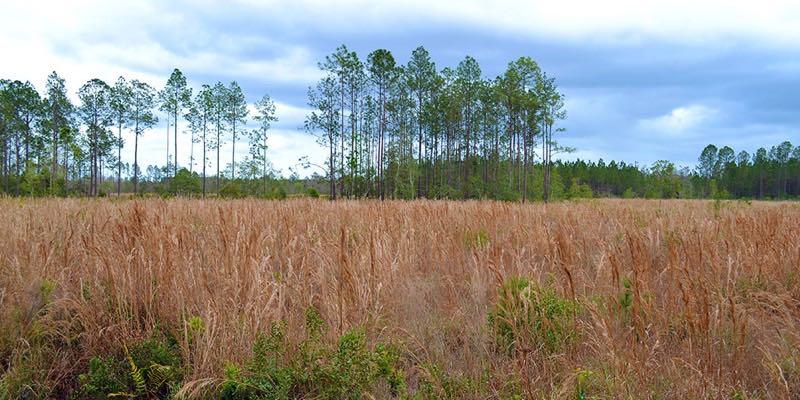 Waldfläche in den USA zu verkaufen