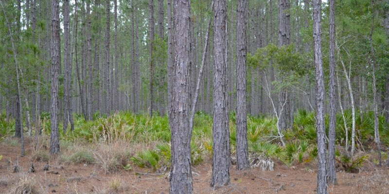 Weyerhaeuser Land For Sale Florida