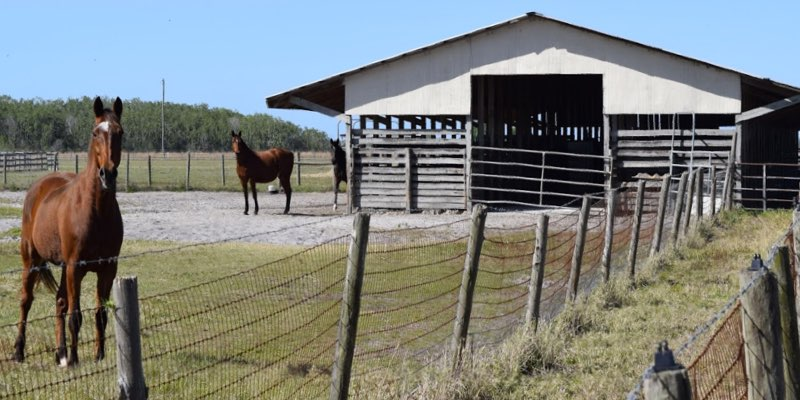 Horse Farm For Sale Near Palm Beach