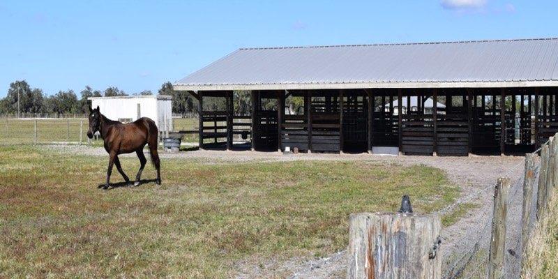 Granja Caballos en Venta Florida EEUU