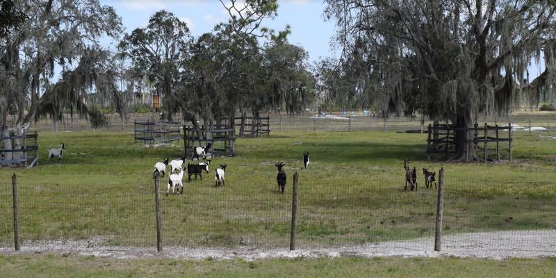 Fazenda Cavalos à Venda Florida EUA