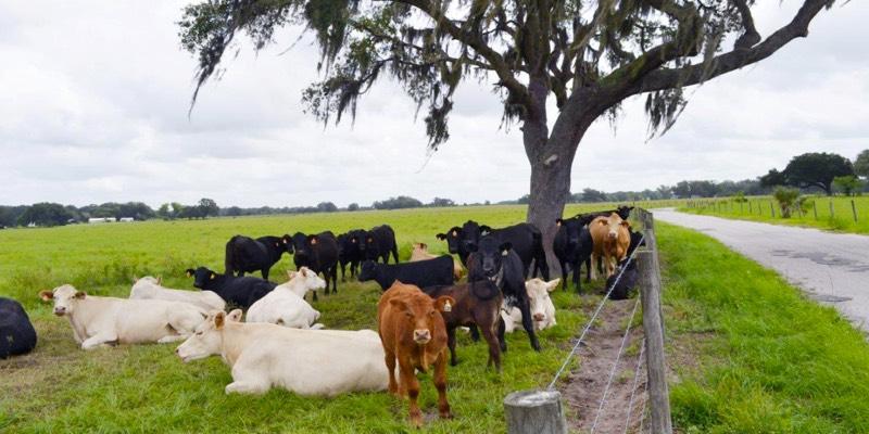 fazenda de gado à venda na florida