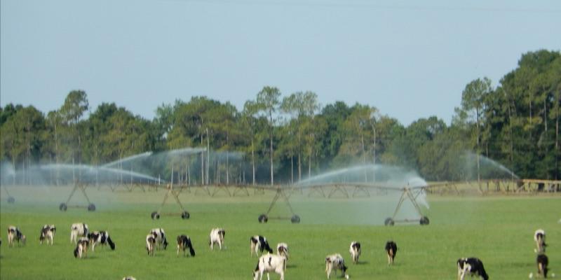 Ferme laitière à vendre en Amérique