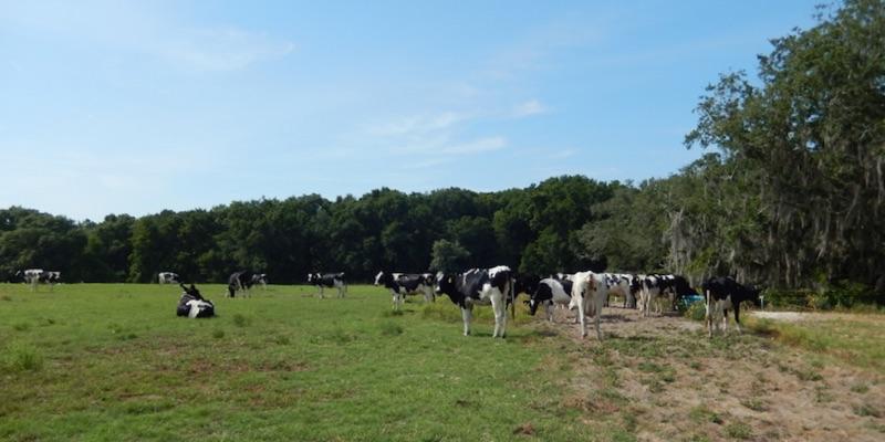 مزرعة الألبان للبيع في أمريكا