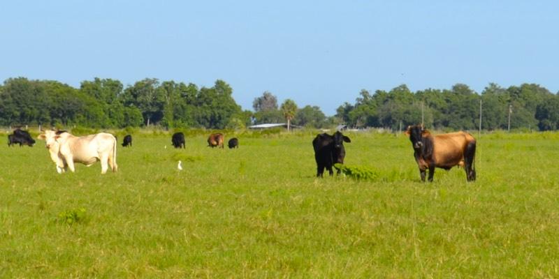 مزرعة الماشية للبيع في أمريكا