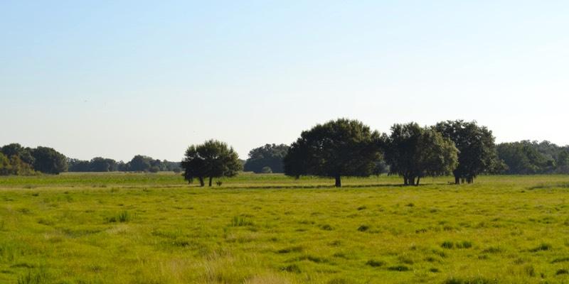 大农场出售在美国