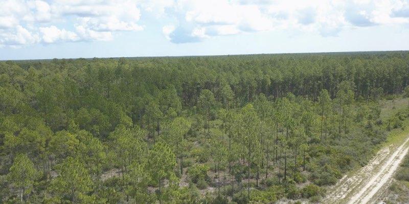 metsämaa myytävänä amerikassa