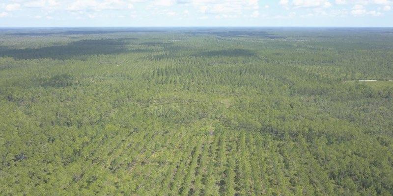 bosgrond te koop in Amerika
