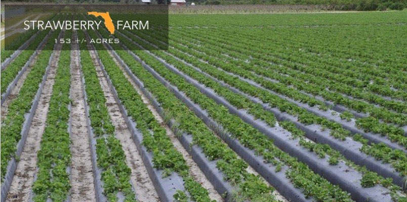Strawberry Farm For Sale in Florida