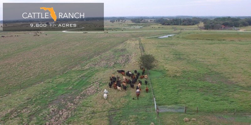 Largest Cattle Ranches in Florida