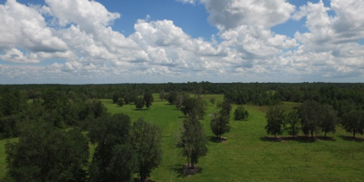 Cattle Ranch For Sale North Florida