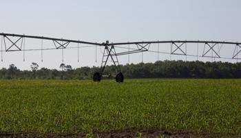 2250 Acre Crop Farm Georgia