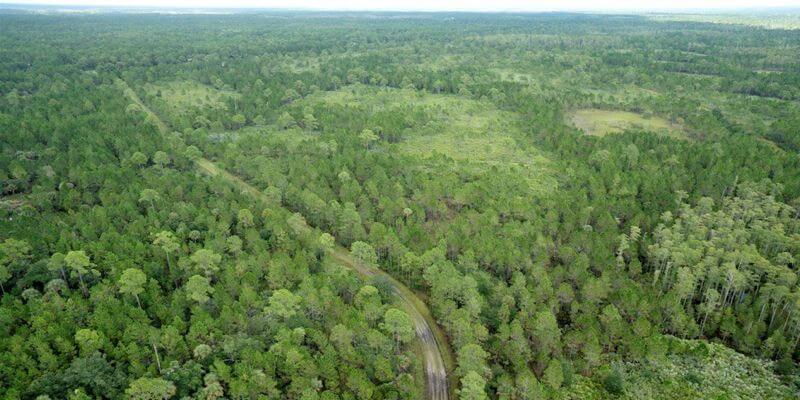 Banco de mitigação de Wetland Flórida para venda