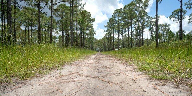 bosgrond te koop in de Verenigde Staten
