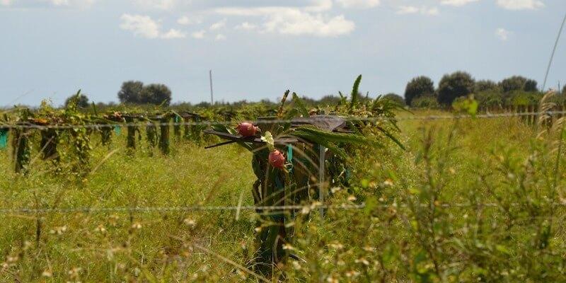 Plantação de Cítricos à Venda na Florida EUA