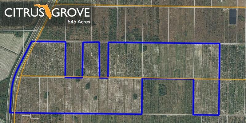545 Acre Florida Citrus Grove For Sale