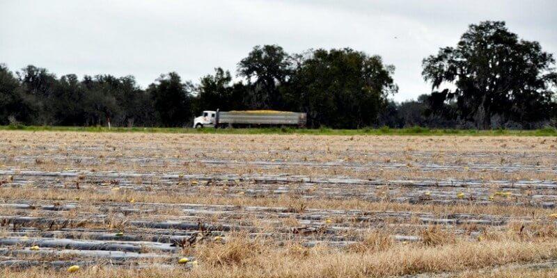 Fazenda de Frutas à Venda na Florida EUA