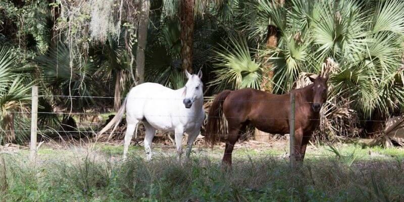 Fazenda Gado Venda Florida EUA