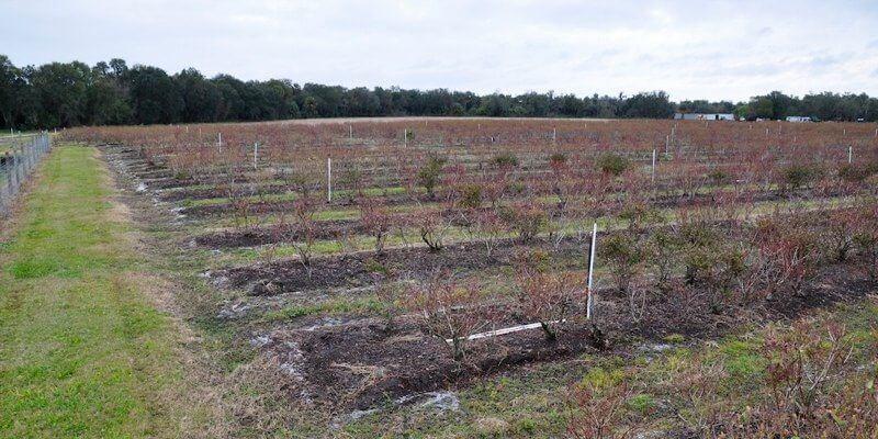 مزرعة الفواكه للبيع في الولايات المتحدة الأمريكية