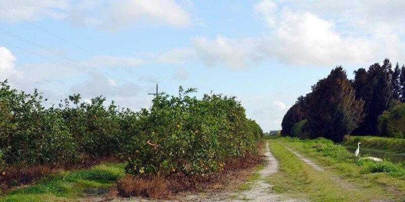 Orange Farm zu verkaufen in Florida
