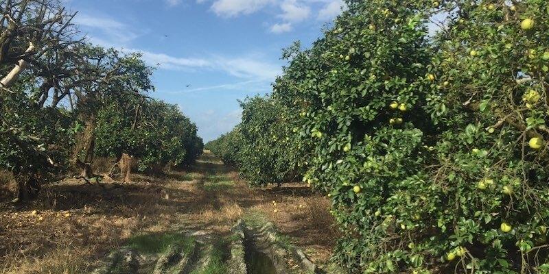 بستان البرتقال للبيع الولايات المتحدة الأمريكية