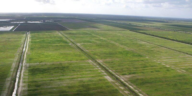 fazenda agricola uma venda Flórida eua