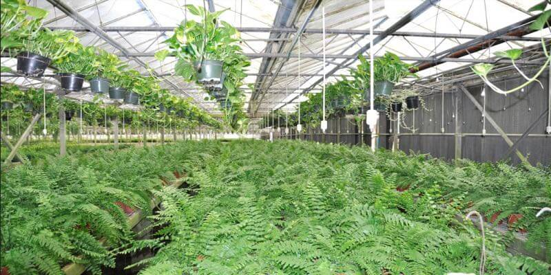 florida greenhouse for sale