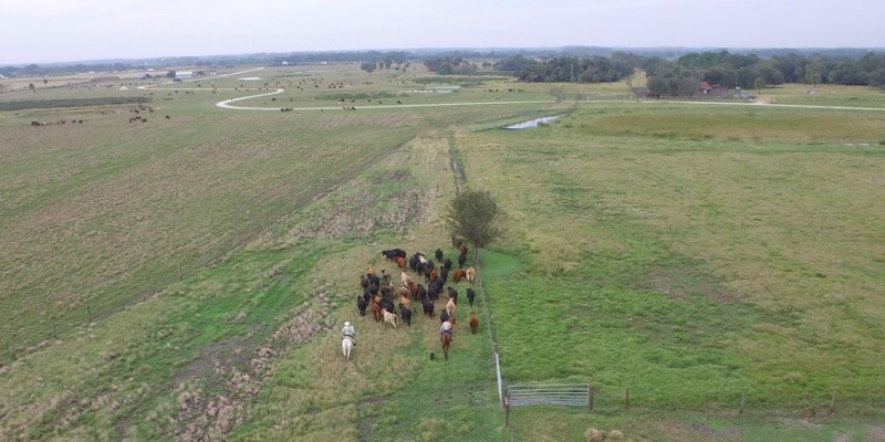 large cattle ranch for sale florida