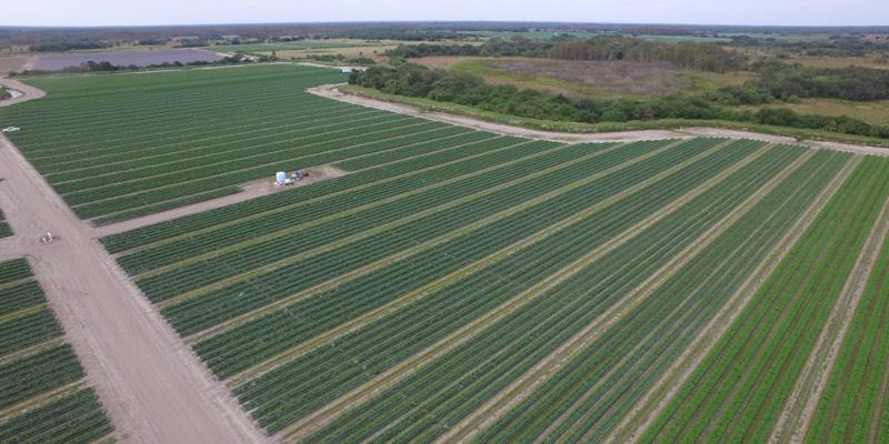 Getreidefarm in Florida Zu Verkaufen