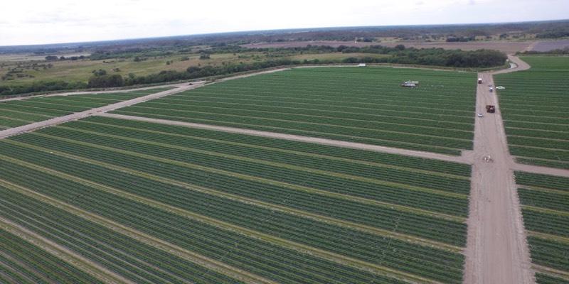 Vieh Ranch in Florida Zu Verkaufen