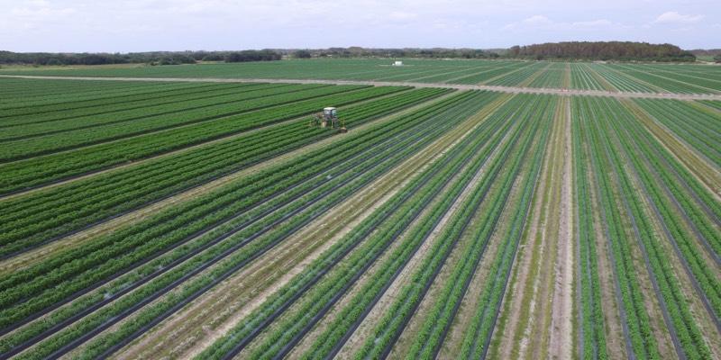 大型农场在美国出售