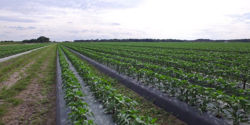 Large Crop Farm For Sale Florida