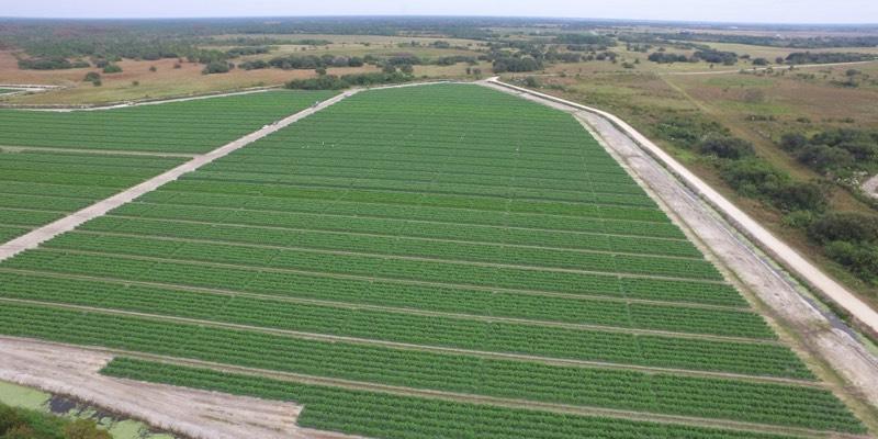 Большой фермерский дом для продажи в США
