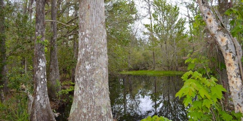 Plantação de madeira à venda na Florida