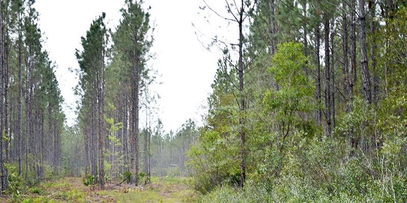 10 7085 Acres Florida Timberland