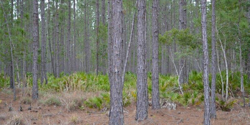 Weyerhaeuser Land For Sale Florida