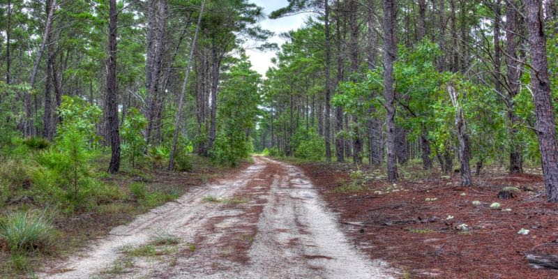 17,000 Acres of Florida Timberland For Sale