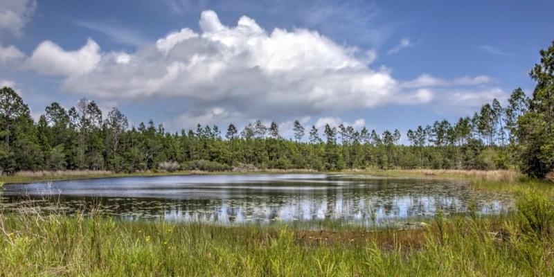 Bluffs of St. Teresa Property Florida