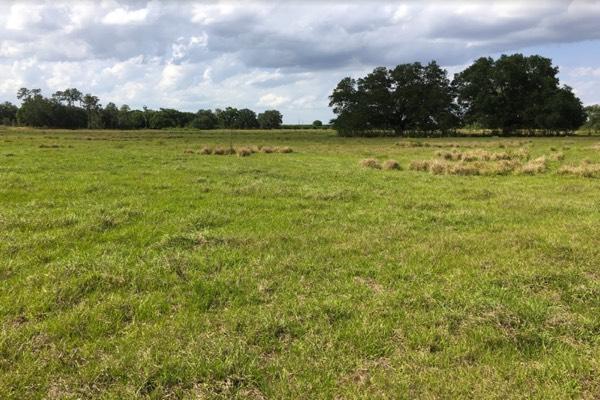 pastoreo de ganado en venta florida eeuu