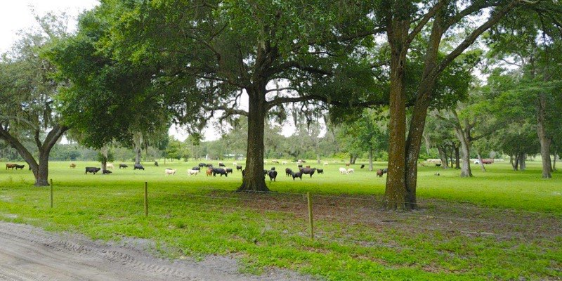 florida cattle ranch for sale
