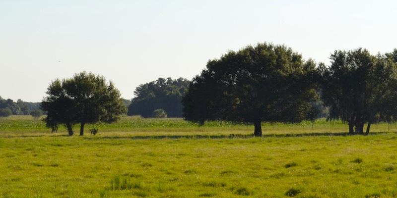 Велика ферма для продажу в Америці