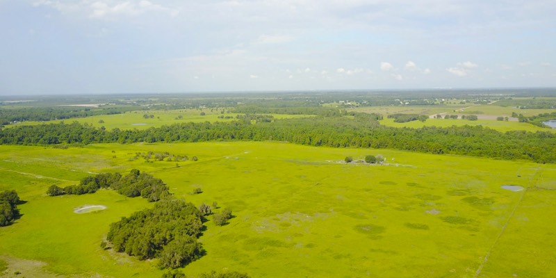 cattle land for sale near bartow