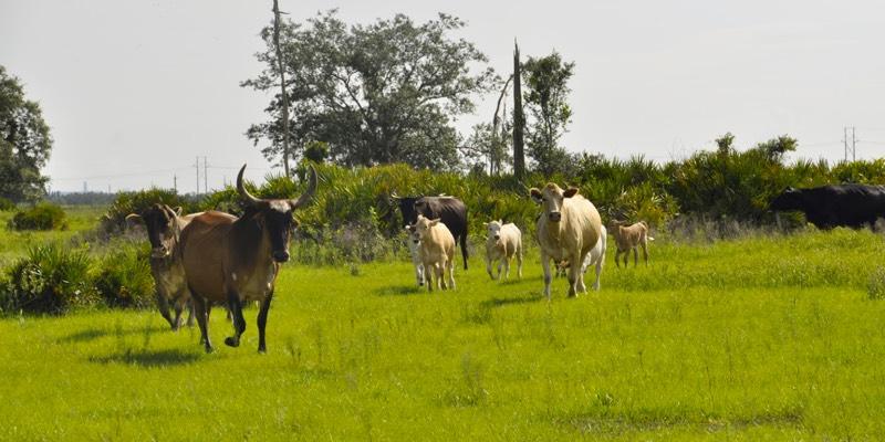 Скотоводческая ферма для продажи в америке
