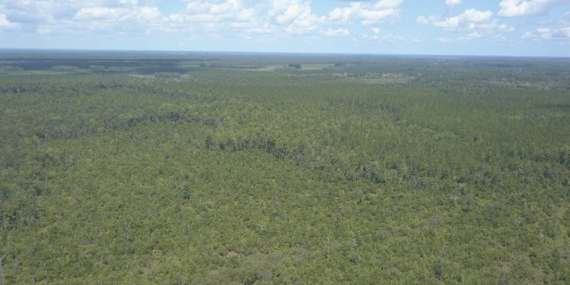 timberland for sale in north florida