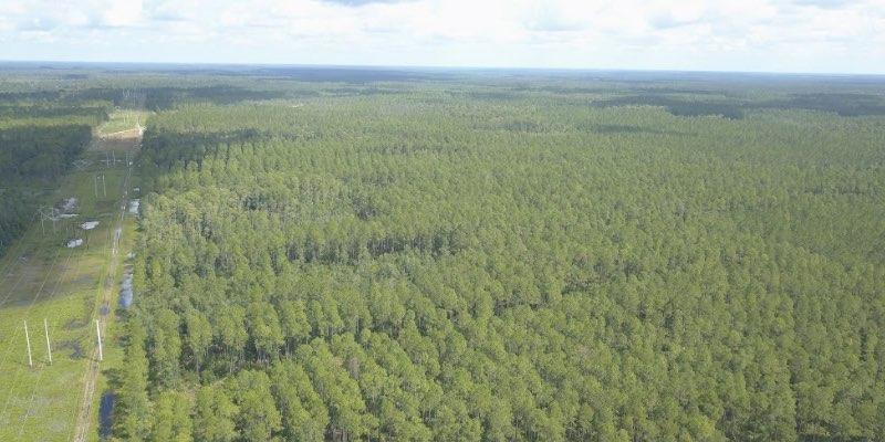 Waldland zum Verkauf em Amerika
