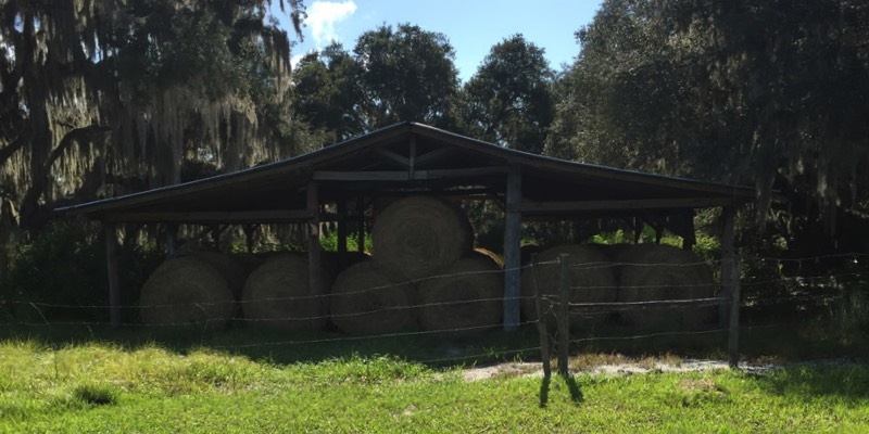 בקר בחווה למכירה באמריקה