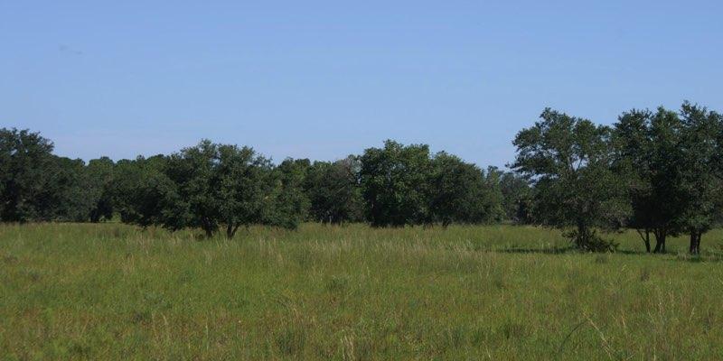 미국에서 판매되는 소 농장
